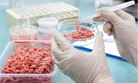 Food safety standards could fall